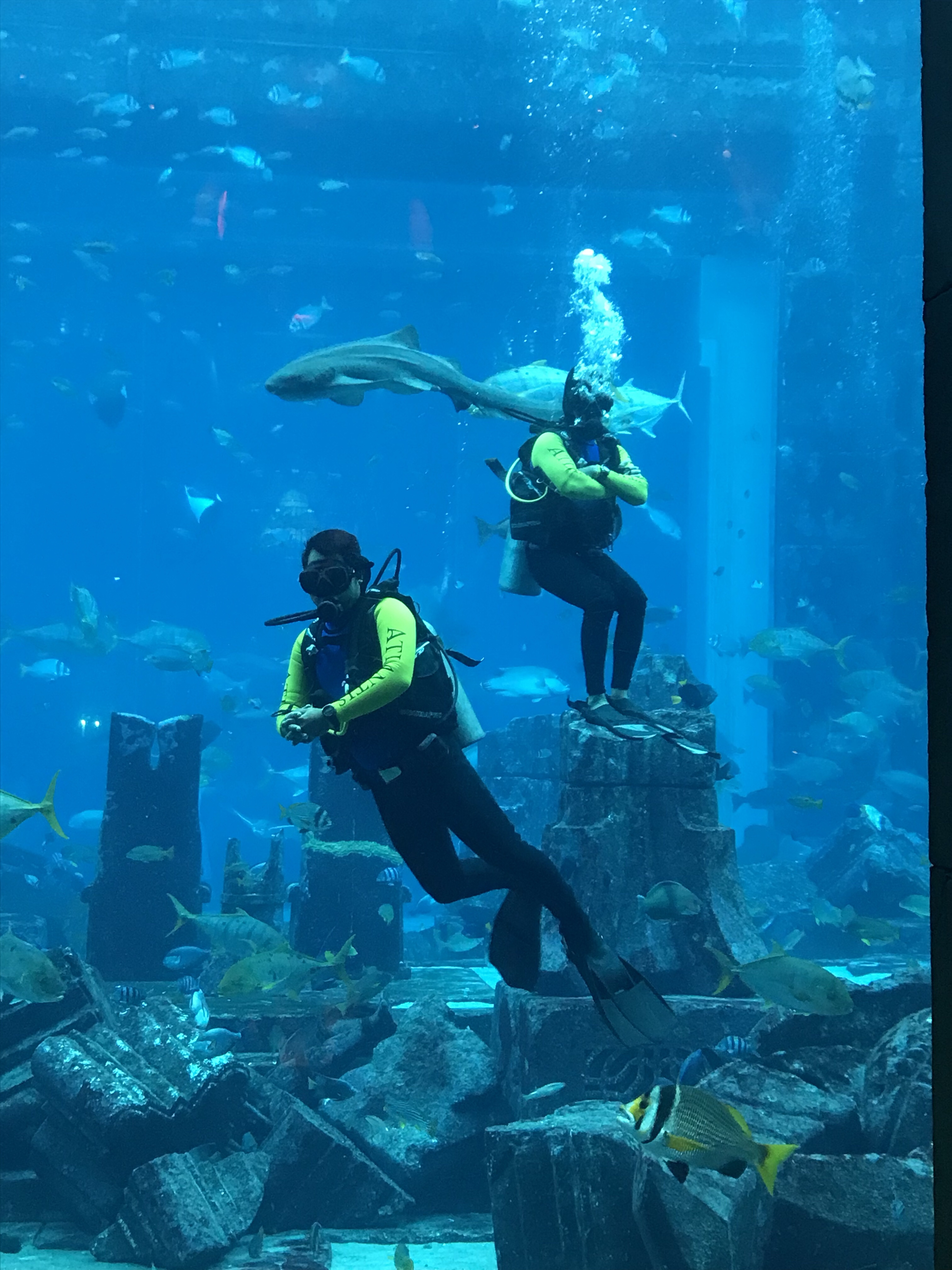The Lost City of Atlantis aquarium