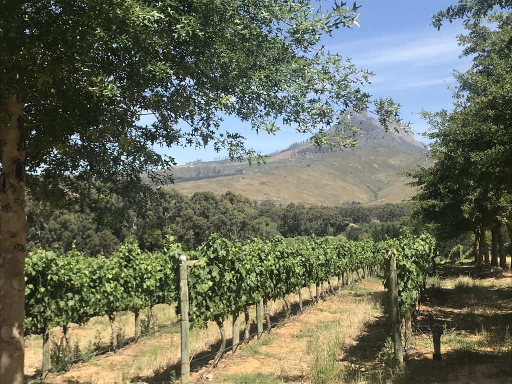 The vineyard at Mitre's Edge Boutique Winery